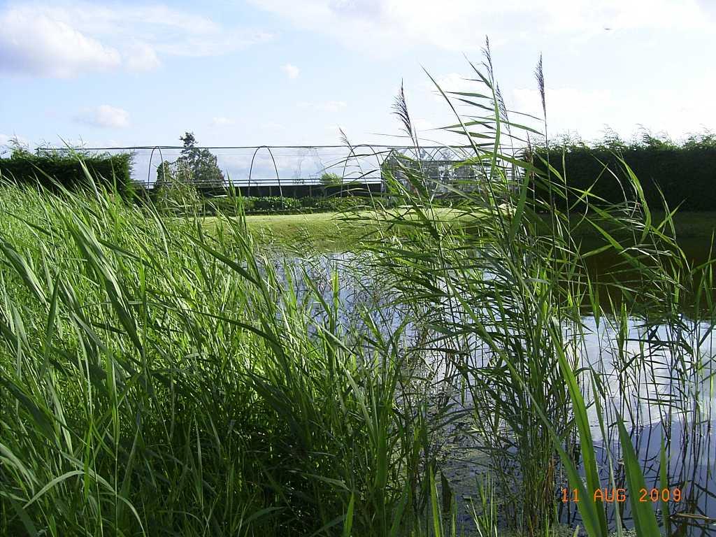 volkstuin zomer 2009 (1)